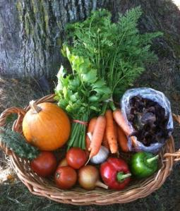 Harvest Share October 31